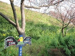 【河津町】 河津桜&菜の花&標識
