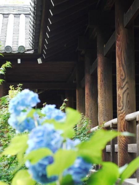 東福寺の通天橋と紫陽花 (G1 NFD50mm)