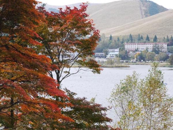 秋の白樺湖 (G1 NFD50mm)