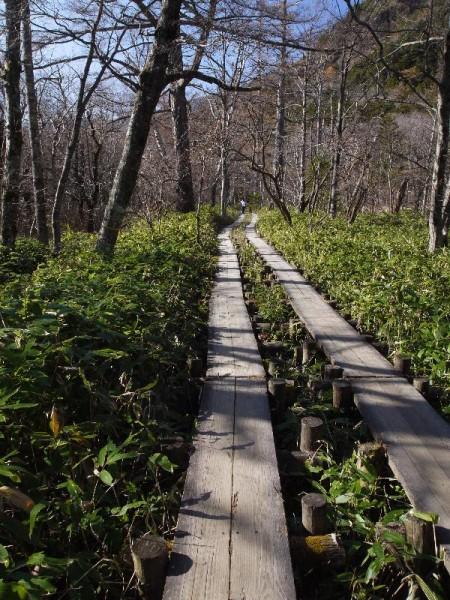 「上高地の木道」 (G1 M.ZUIKO DIGITAL 14-42mm F3.5-5.6)