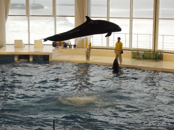 「イルカの大ジャンプ」