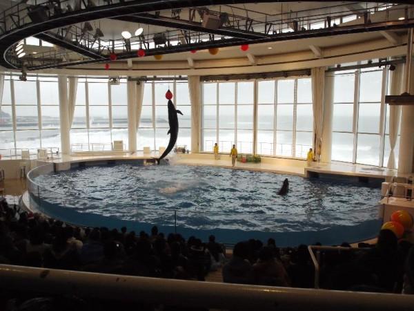 「イルカの垂直大ジャンプ」