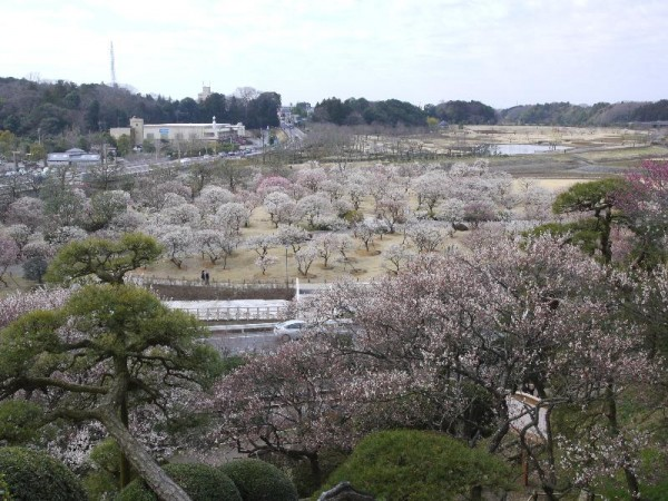 「偕楽園の梅」