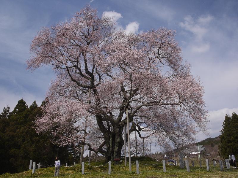 「福島県矢祭町 戸津辺の桜」