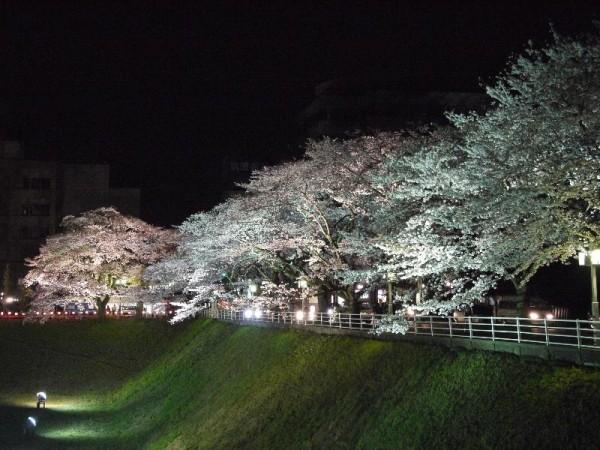 「水戸旧県庁前 夜桜」