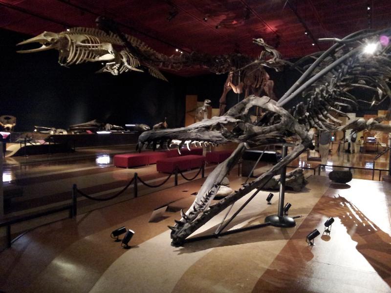 「いわき市石炭・化石館 恐竜の化石」