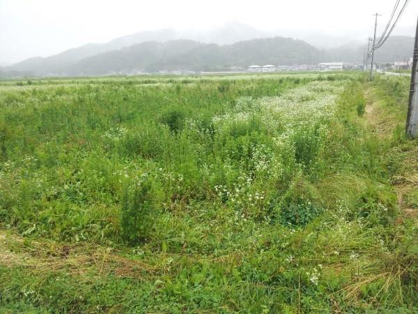 「荒れ果ててしまっている川内村の田畑」