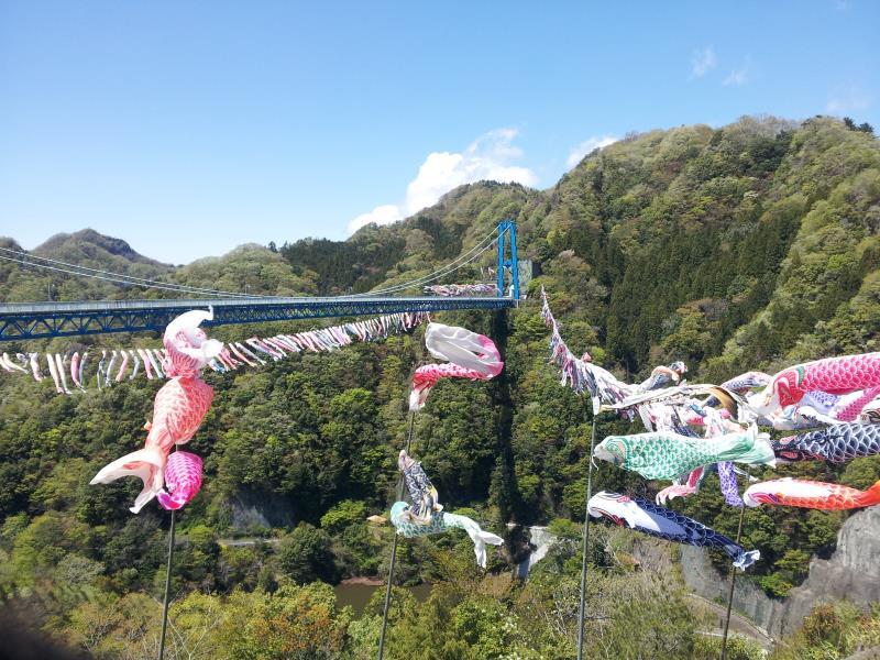 竜神大吊橋とこいのぼり