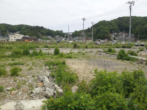 雑草が生えて緑になった被災地