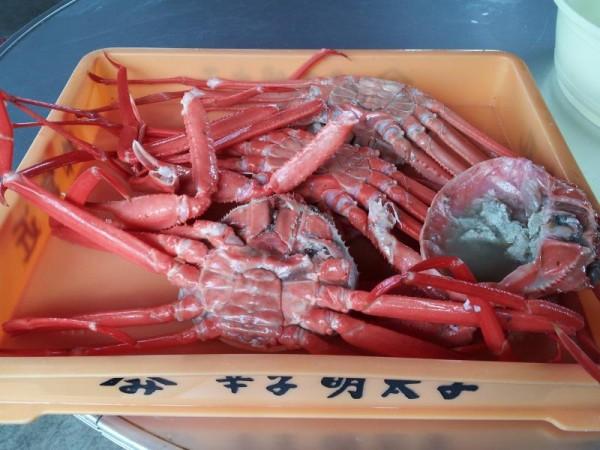 紅ズワイガニ1000円分