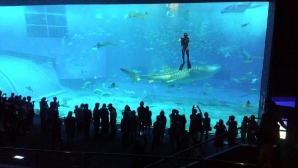 美ら海水族館 ジンベイザメ