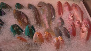 泊いゆまち 色鮮やかな魚