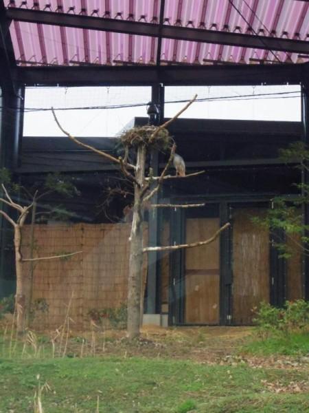 【新潟県佐渡市】 トキふれあいプラザ トキの巣