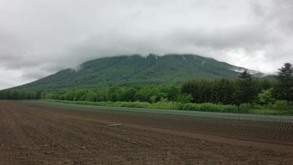 羊蹄山(山頂は見えない)