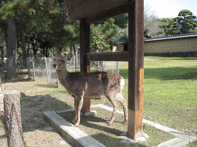 ポーズをきめる「鹿」