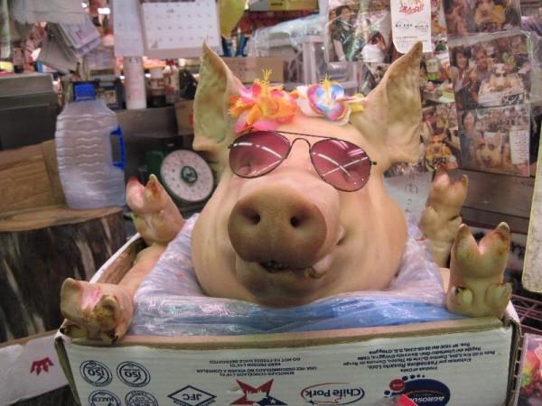 牧志公設市場の「飛べない豚」さん