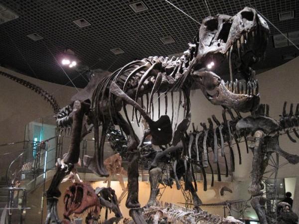 『博物館と言えばやっぱり恐竜』
