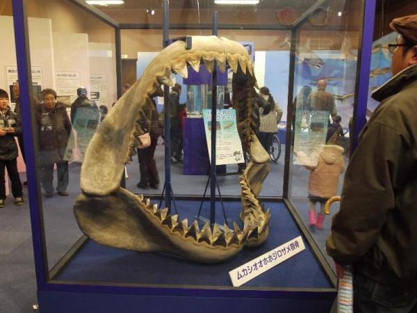 「ムカシオオホホジロザメ顎骨」