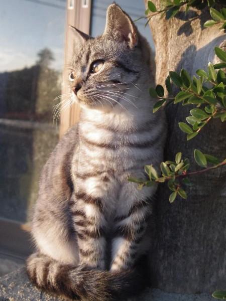 福島県田村市の夕日を見つめる猫