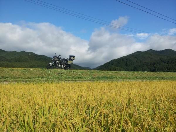 福島県天栄村の稲穂と青空とNC700X