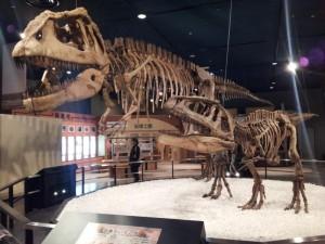 名古屋市科学館 恐竜