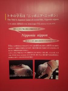 【新潟県佐渡市】 トキ資料展示館 トキの学名はニッポニア・ニッポン