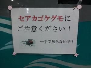 セアカゴケグモに注意の張り紙