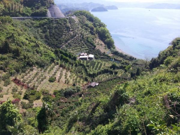 愛媛の果樹園