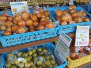 【愛媛県瀬戸町】 道の駅 瀬戸農業公園の柑橘類(とにかく安い!)