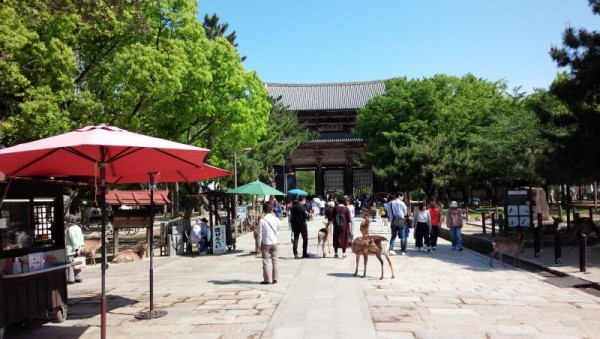 奈良公園にて