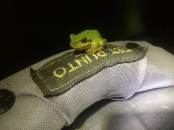 遊びに来たカエル